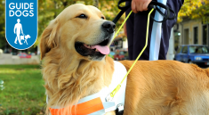 Guide Dogs Charity